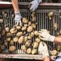 Während die Preise für Mineralölprodukte im Juli leicht stiegen, sanken jene für Gemüse oder Kartoffeln. (Symbolbild)