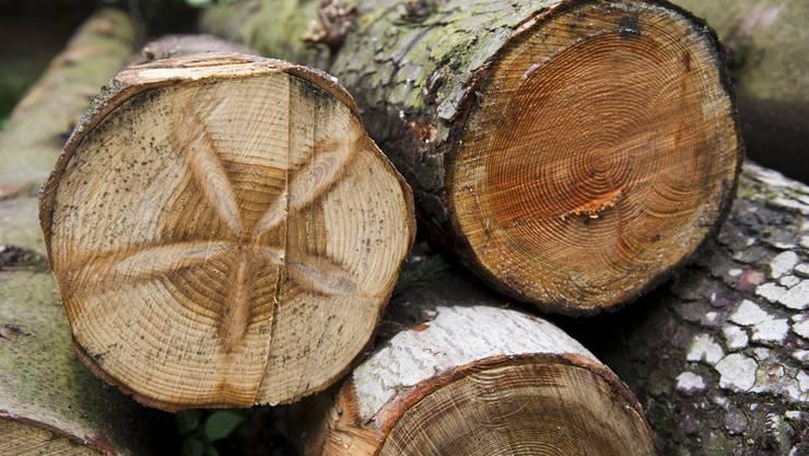 Man war sich einig, dass die Verwendung von Holz aus der Region energietechnisch am sinnvollsten wäre.