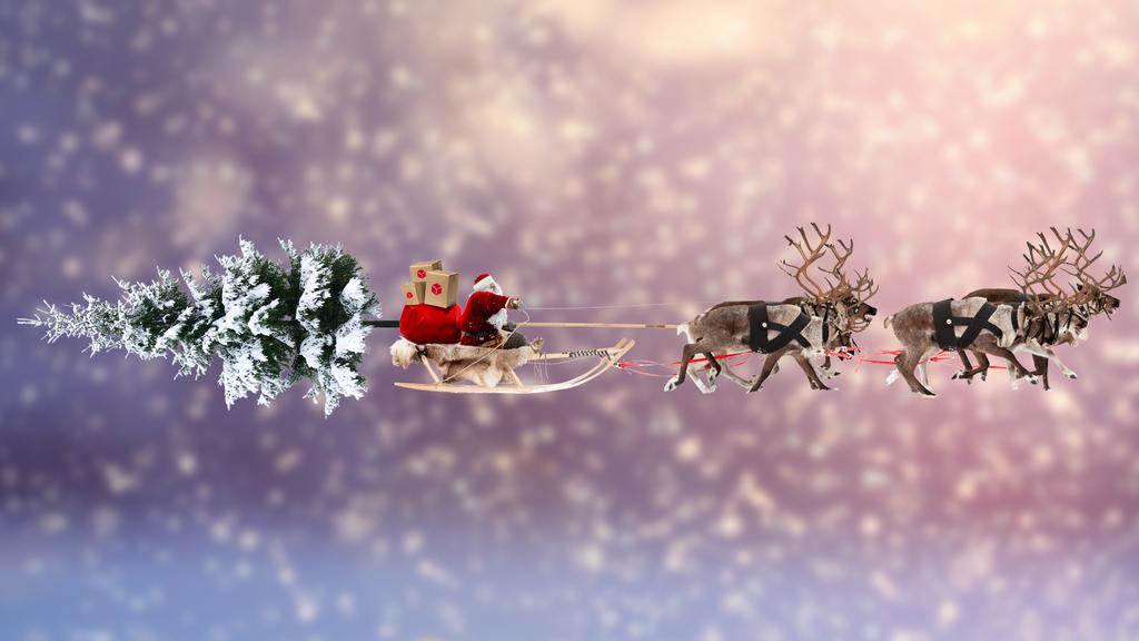 Gewinne einen Weihnachtsbaum zu dir nach Hause