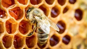 Der Angeklagte bot im Internet auch mehrfach Schweizer Bienenvölker und -waben an, obwohl er solche aus Deutschland importieren wollte. (Symbolbild)