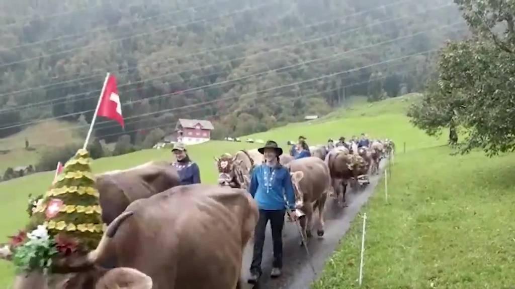 Das waren die schönsten Alpabzüge der Zentralschweiz