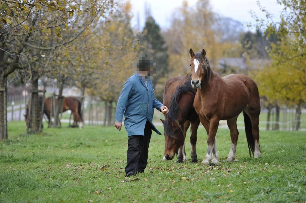 Pferdezüchter quält Tiere zu Tode