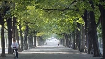 In Genf sollen Bäume Wohnhäusern weichen. Symbolbild. (Quelle: Keystone)