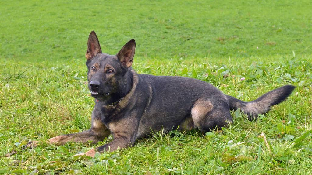 20-12-18 Polizeihund Rusty