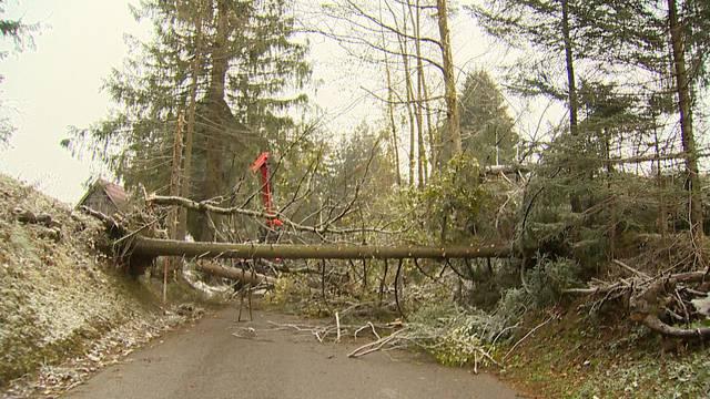 Umgestürzte Bäume im Kanton St. Gallen