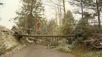 Im Kanton St. Gallen musste die Feuerwehr in der Nacht 16 Mal ausrücken. Im Toggenburg, im Rheintal, aber auch in der Region See und Gaster stürzten Bäume um.
