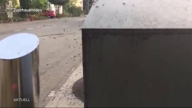 Bienen besetzten Altglascontainer in Aarau