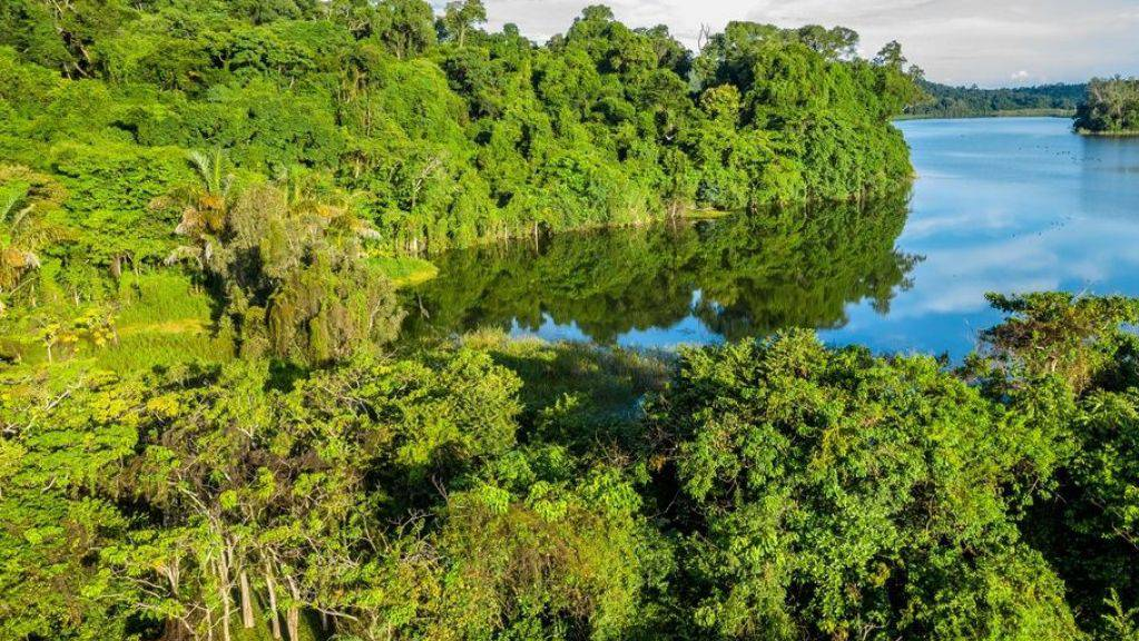 So dichte Regenwälder wie hier im Ankarafantsika Nationalpark wird es auf Madagaskar bald nicht mehr geben. In 30 Jahren wird die Insel unter anderem von der Maispflanzer-Mafia kahl gerodet sein, befürchten Umweltschützer. (Archivbild)