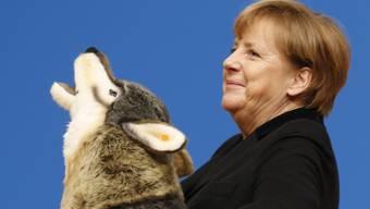 Die deutsche Kanzlerin Angela Merkel mit einem Plüschwolf, den sie am CDU-Parteitag als Geschenk erhalten hat. Sie wirbt dort für ihre Flüchtlingspolitik, welche Parteiintern umstritten ist.
