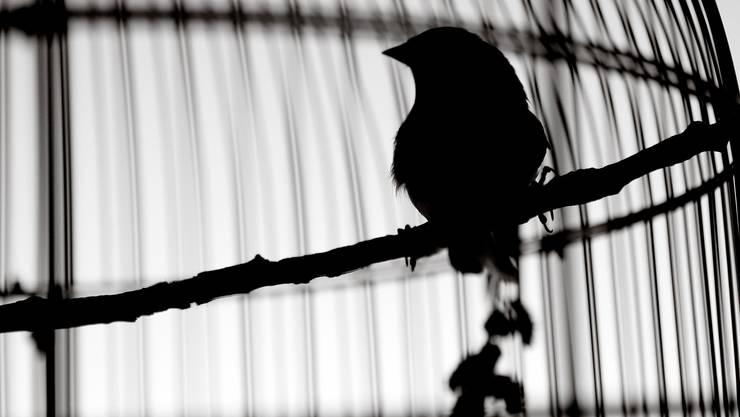 Die Künstlerinnen im Lockdown sind stumm - wie Vögel im Käfig.