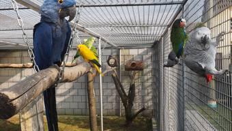 Volière mit Papageien in Dulliken