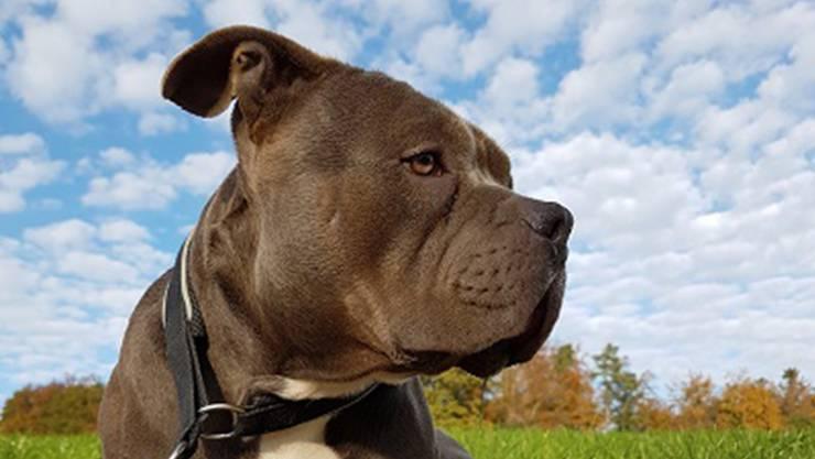 Hund Mash wurde aus dem Unterkulmer Tierheim gestohlen.
