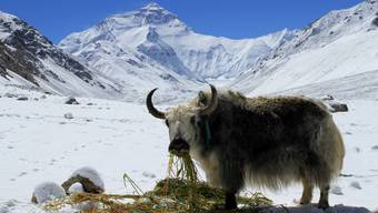 Der Mount Everest