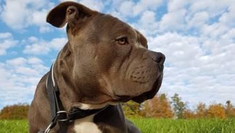 Gesucht wird: Listenhund Mash.