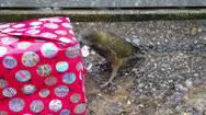 Weihnachten im Zoo