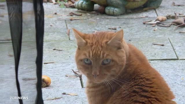 Katzen-Sperre im Zürcher Tierspital