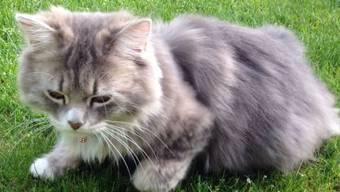 Den Anblick wird die Familie Rebmann aus Oberrohrdorf niemals vergessen. Ihre Katze wurde vermutlich von einem Tierhasser geköpft.