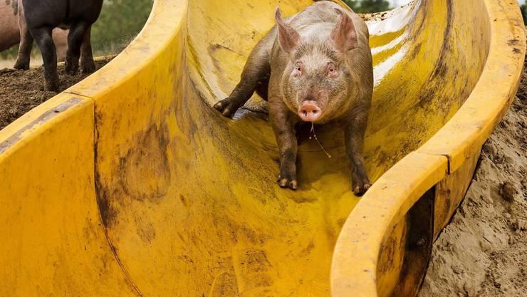 Welche Schweinerei kommt als nächstes aufs Tapet?
