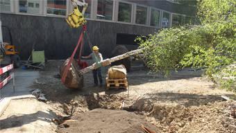 Die Baumpflanzung bei der Barmelweid.