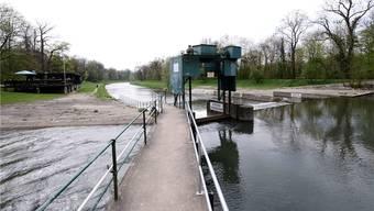 Die Wasserqualität der Wiese lässt derzeit zu wünschen übrig.