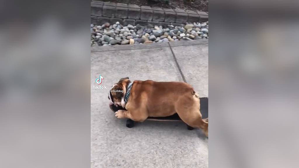 Dieser Hund kann Skateboard fahren