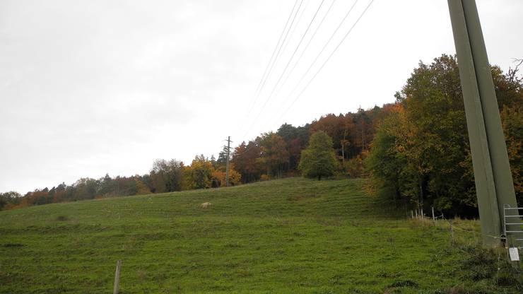 Das geplante Wasserreservoir im Gebiet Holeeberen auf dem Gubrist in Weiningenwird künftig auch von Unterengstringen genutzt.