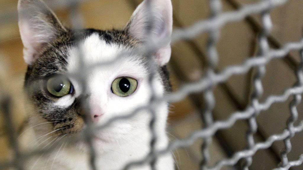 Selbst die anschmiegsamste Katze kann von heute auf morgen und ohne Gruss für immer verschwinden (Symbolbild)