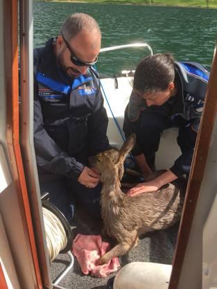 Ein Junge hat der Gewässerpolizei gemeldet, dass sich ein Reh im Ägerisee befindet.