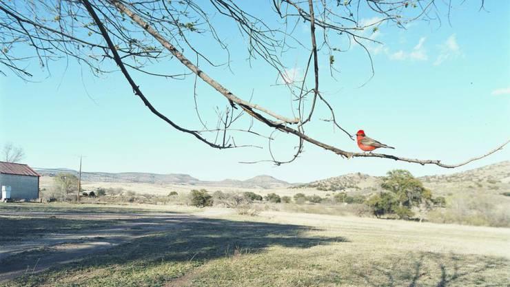 Der kleine Vogel in der grossen Welt: Fotos des französischen Künstlers Jean-Luc Mylayne sind im Aargauer Kunsthaus zu sehen.