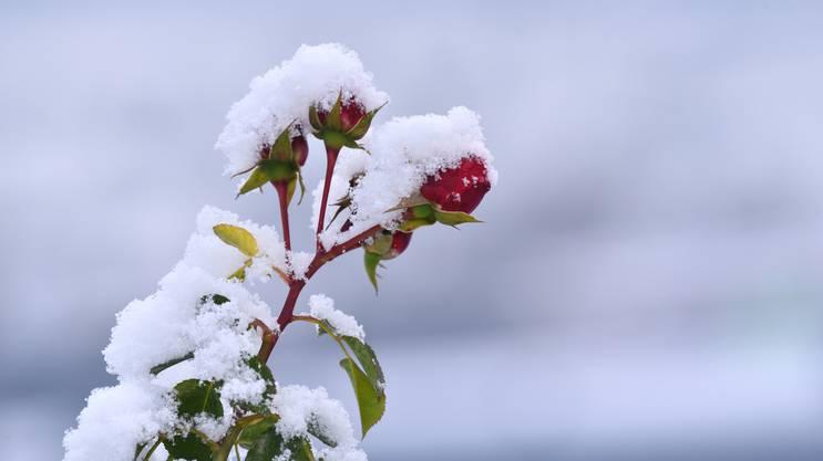 Der erste Schnee dieser Saison hat die Natur mit einem süssen Zuckerguss versehen...
