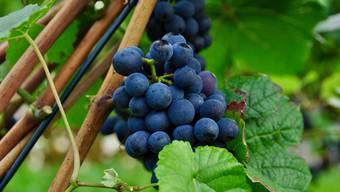 Die Weinmesse in Zürich dauert noch bis am 14. November. (Themenbild)