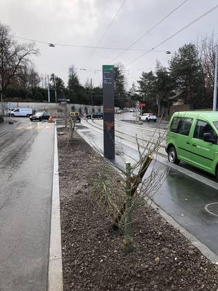 Bereits vergangenen Dezember wurden an der Lörracherstrasse 14 Jungbäume angesägt.