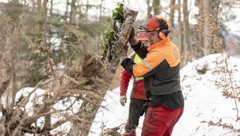 Aufräumarbeiten im Oetwiler Wald