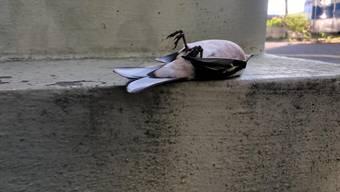 Vogelsterben Basel