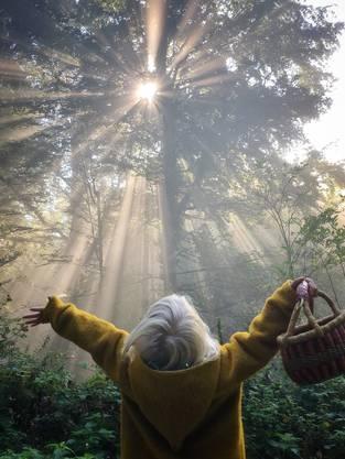 Dieser Moment, wenn die Sonne durch den Morgenebel bricht!