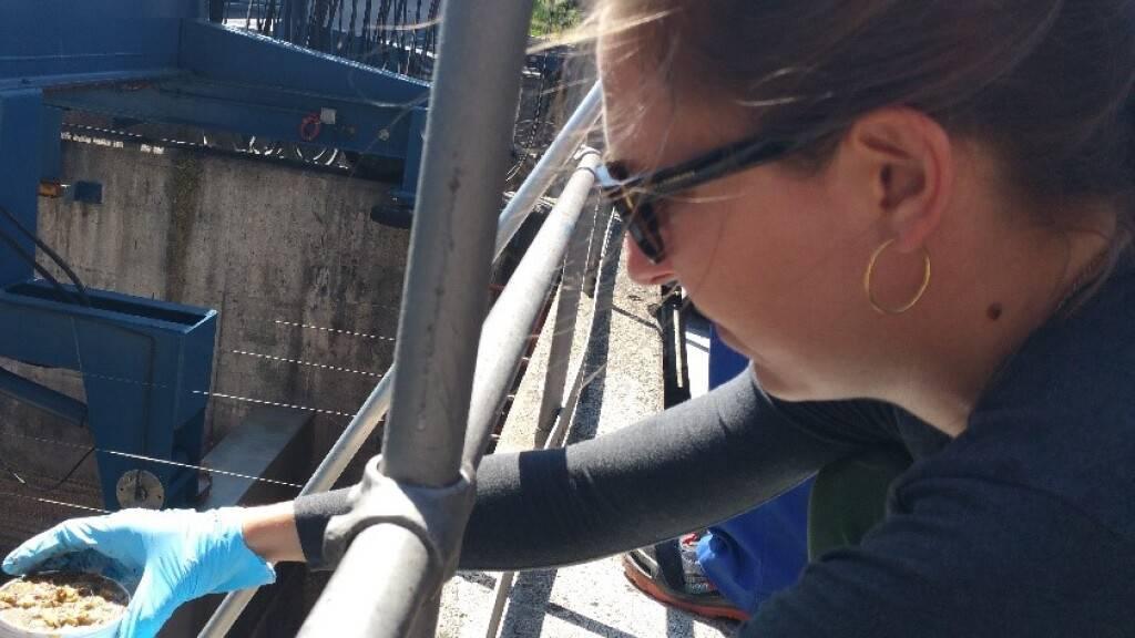 Die Eawag hat als erste Forschungsstelle weltweit untersucht, welche Mengen an Quecksilber tatsächlich in Kläranlagen fliessen und wie effektiv diese die giftige Substanz herausfiltern. Im Bild entnimmt die Masterstudentin Lara Cayo Klärschlammproben im Klärwerk Werdhölzli. (Foto: Elke Suess, Eawag)