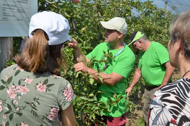 Viele Gäste informierten sich auf dem Loorhof in Lupfig darüber, welche Arbeit hinter der Apfelproduktion steckt und auch welche Schwierigkeiten damit verbunden sind.Bruno Wirth zeigt Blüten- und Blattknospen.