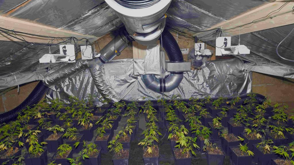 Hanfplantage bei Brand entdeckt