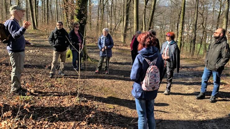 Im Buchenwald ob dem Steinbruch Säli