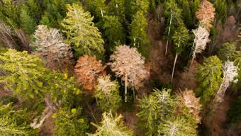 Das Waldlager war von Mitarbeitern des Forstreviers entdeckt und gemeldet worden. (Symbolbild)