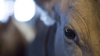Die jüngsten Fälle von Tierquälerei rufen die Behörden auf den Plan. Bund und Kantone arbeiten derzeit ein neues Kontrollkonzept im Tierschutz aus. (Symbolbild)