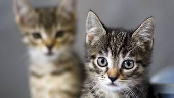 Neben einem Hof fand die Polizei Kätzchen, denen nicht mehr zu helfen war. (Symbolbild)