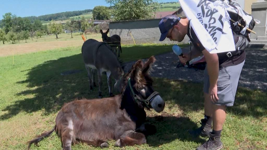 Zwei Esel im Aargau: Tag 4