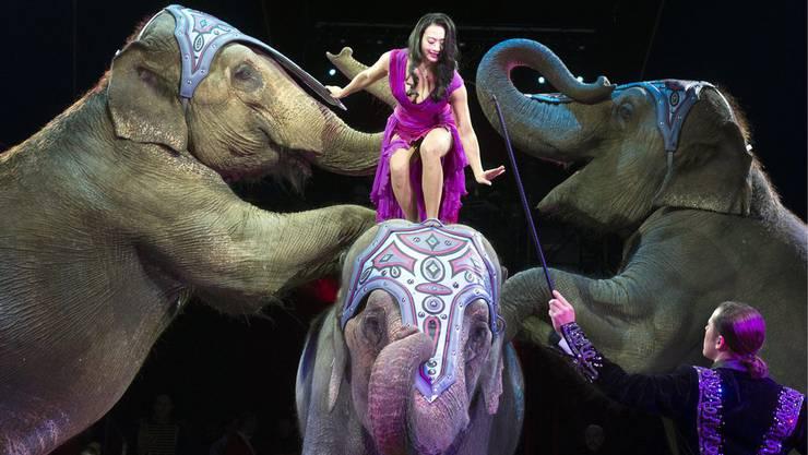 Lianna Knie mit ihren Elefanten