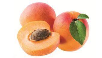 Aprikosen sind nicht leicht anzupflanzen.