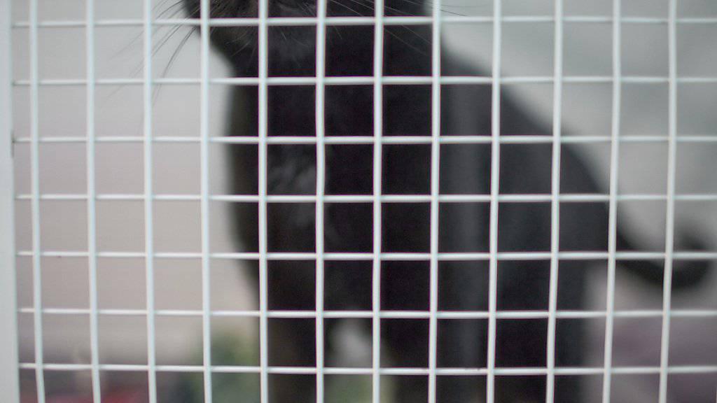 Die Thurgauer Behörden haben in Müllheim eine private Tierhaltung wegen hoch prekärer Haltungsverhältnisse geräumt. 21 Katzen lagen tot in einem Gefrierschrank. (Symbolbild)