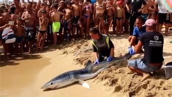 Hai-Angriffe