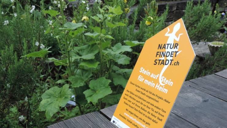 Im Projekt Natur findet Stadt werden Gärten mit naturnahen Gartenelementen ausgezeichnet.