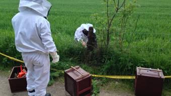 Die Berufsfeuerwehr konnte das Bienenvolk einsammeln und einem Spezialisten übergeben.