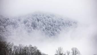 Leserreporter Schneebilder 1. Dezember 2020